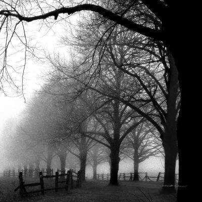 Black and White Morning