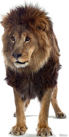Talking Lion Lifesize Standup