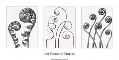 Art Forms in Nature I