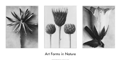 Art Forms in Nature II