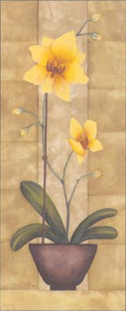 Melodic Orchid IV