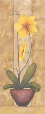 Melodic Orchid VI