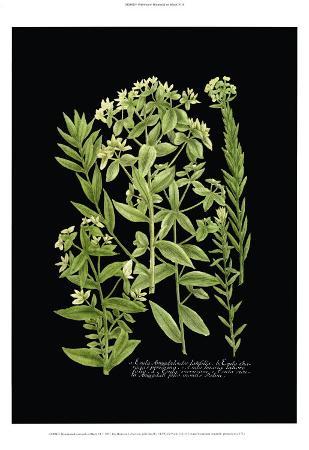 Weinmann Botanical on Black VI