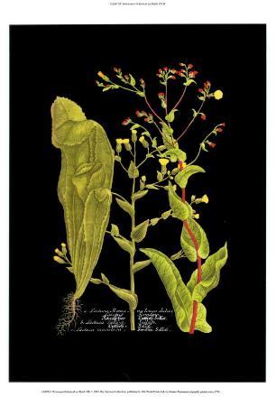 Weinmann Botanical on Black VIII