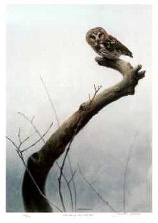 Wet Spring - Saw Whet Owl
