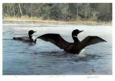 Yodeling - Common Loon