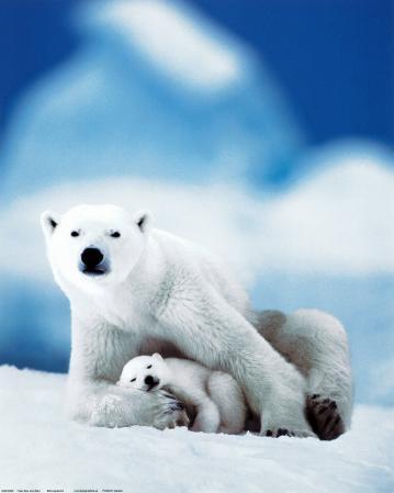 Polar Bear and Baby