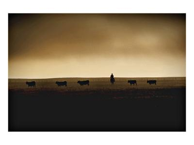 American Cattle Rancher