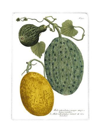 Antique Melons II