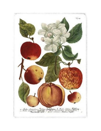 Weinmann Fruits I