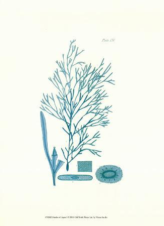 Shades of Aqua I