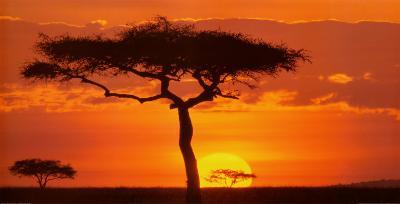 Masai Mara Plains, Kenya