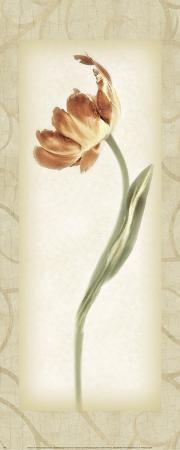 Blossom III, Tulip