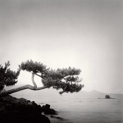 Two Branched Pine, Nakano Umi, Japan
