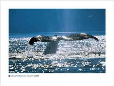 Sunlight on Whale Tail