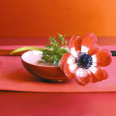 Anemone Rouge