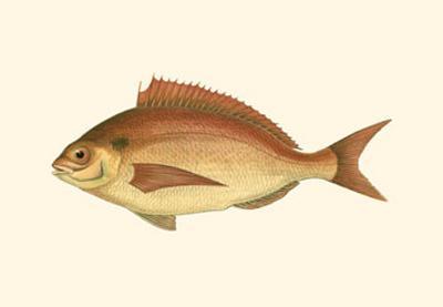 Small Antique Fish III