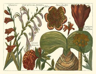 Printed Arena Botanical II