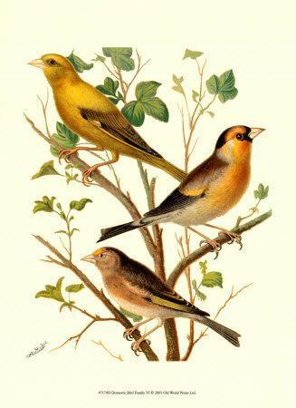 Domestic Bird Family VI