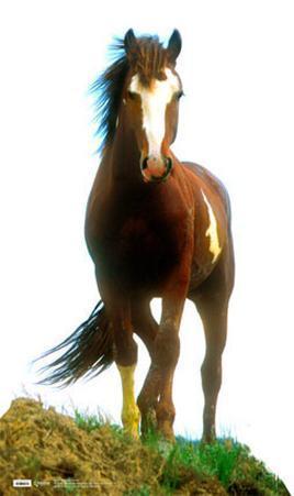 Mustang Lifesize Standup