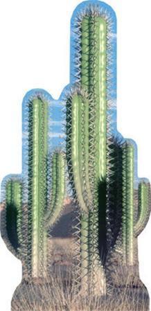 Cactus Group
