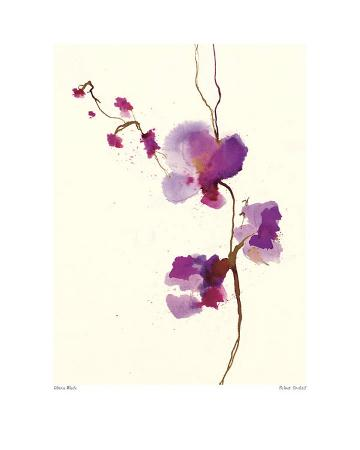 Velvet Orchid
