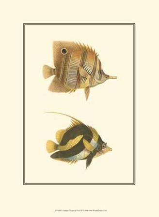 Antique Tropical Fish II