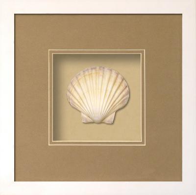 *Exclusive* Irish Deep Shell Shadowbox - Sand