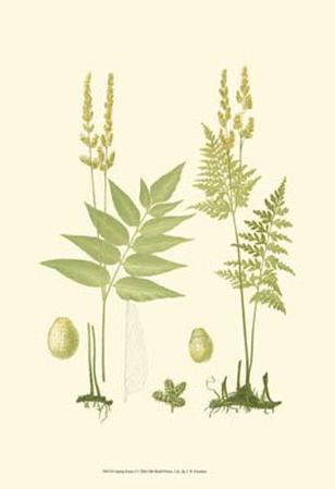 Spring Ferns I
