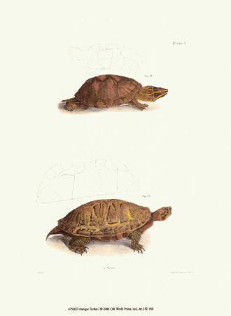 Antique Turtles I