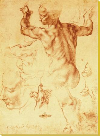 Anatomy Sketches (Libyan Sibyl)