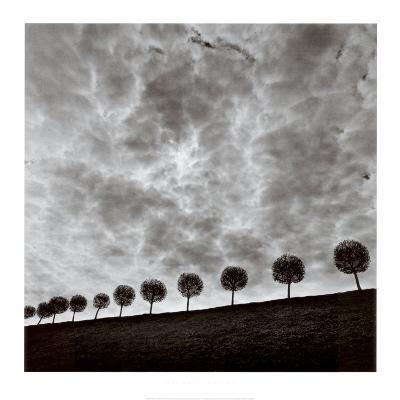 Ten and a Half Trees, Peterhof, Russia, 2000