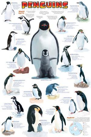 Penguins Chart