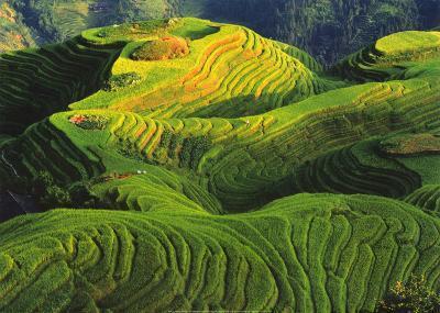 Rizieres en Terrasse, Chine