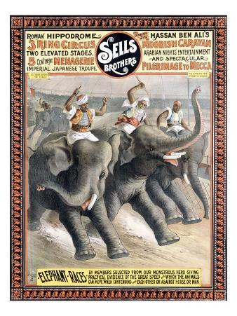 Sells Brotheres, Elephant Race