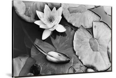Water Lily Splendor, Central Park