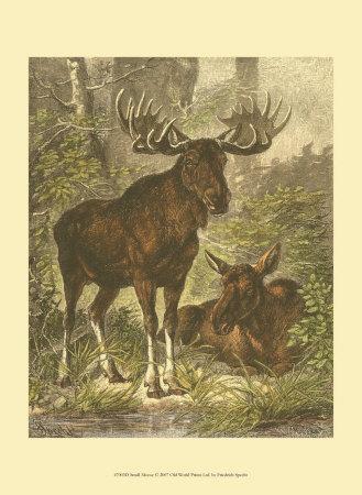 Small Moose