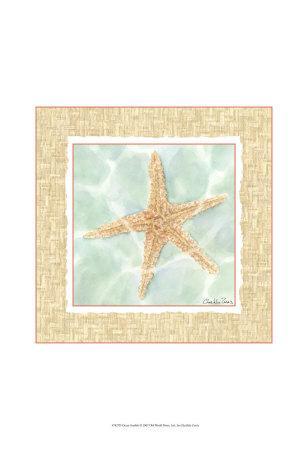 Ocean Starfish
