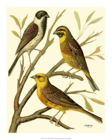 Domestic Bird Family I