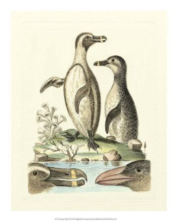Aquatic Birds IV