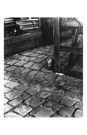 Dans la Cours, 255 Avenue Alesia, c.1947