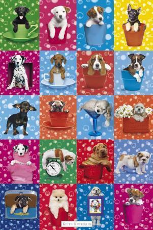 Kimberlin Dog Collage