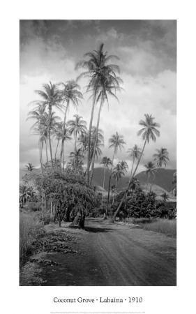 Coconut Grove, Lahaina, 1910