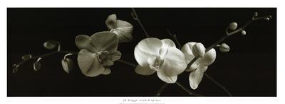 Orchid Sprays