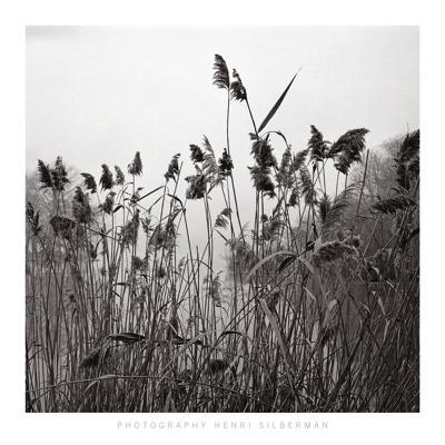 Prospect Lake Grasses, Prospect Lake