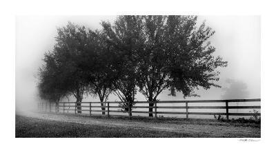 Row of Trees II