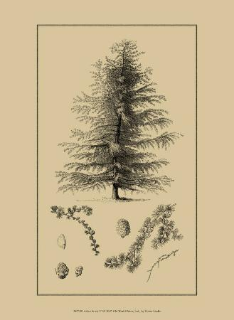 Arbor Study VI