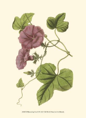 Blossoming Vine II
