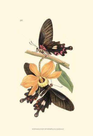 Butterflies and Flora II