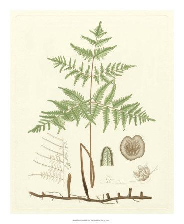 Eaton Ferns III